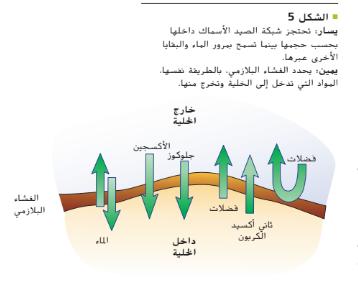 حل درس الغشاء البلازمي أحياء تاسع متقدم سراج