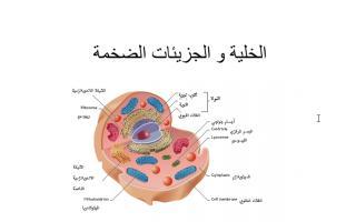 تلخيص علوم الخلية والجزيئات الضخمة سادس فصل ثاني